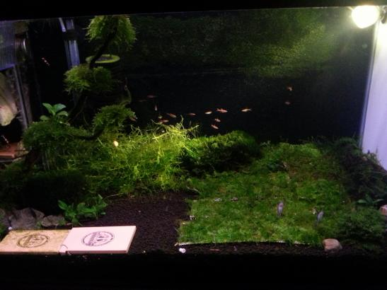 just my simple shrimp tank AROWANA Forum ASIAN AROWANA,AROWANA,STINGRAY The1sheet