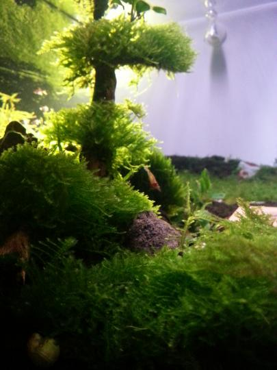 just my simple shrimp tank AROWANA Forum ASIAN AROWANA,AROWANA,STINGRAY The2sheet