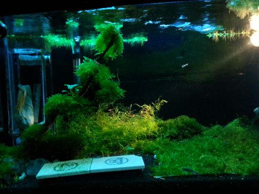 just my simple shrimp tank AROWANA Forum ASIAN AROWANA,AROWANA,STINGRAY The3sheet