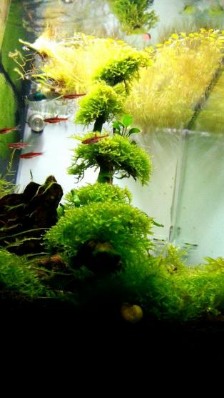 just my simple shrimp tank AROWANA Forum ASIAN AROWANA,AROWANA,STINGRAY The4sheet
