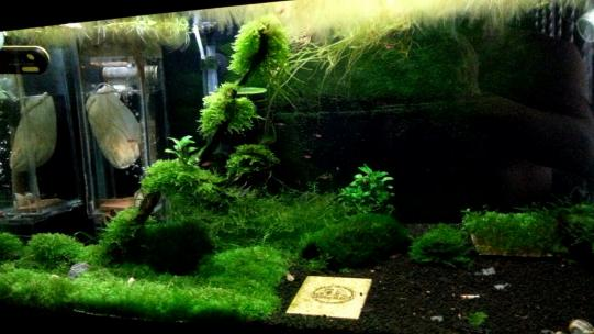 just my simple shrimp tank AROWANA Forum ASIAN AROWANA,AROWANA,STINGRAY The5sheet