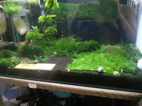 just my simple shrimp tank AROWANA Forum ASIAN AROWANA,AROWANA,STINGRAY The6sheet