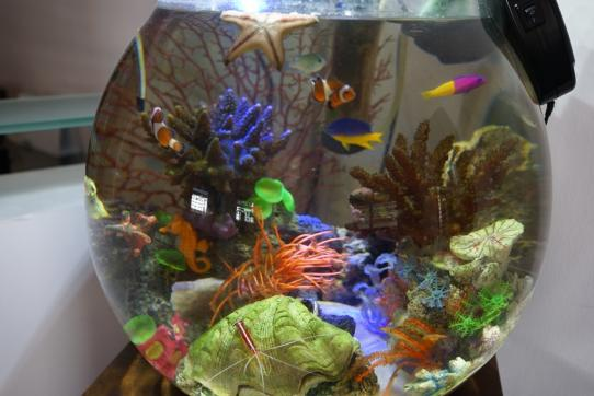 Nano marine tank only fish is real for Best fish for nano tank