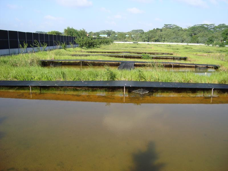 Name:  Arowana Pond 1.jpg